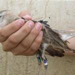 Bảo vệ động vật quý hiếm bằng công nghệ thiết bị thông minh có thể đeo được